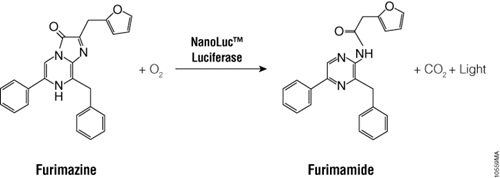 The bioluminescent reaction catalyzed by NanoLuc® luciferase.